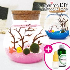 마리모밥 증정 마리모 DIY 세트 무드등 만들기 키트