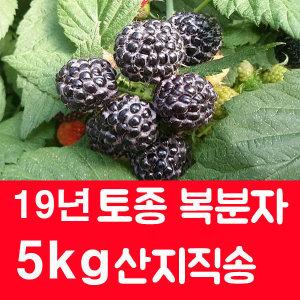 19년 햇 토종 복분자 5kg 슈퍼복분자 블랙베리