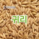귀리 1kg 2018년 캐나다산 귀리 1kg 슈퍼푸드 잡곡