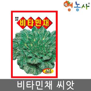 비타민채씨앗 2000립 비타민채씨 채소 나물 다채 씨앗