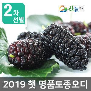 지리산 토종오디(명품) 5kg  2019년 햇오디 산지직송