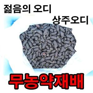 오디10kg 무농약재배오디 상주오디농가직송 바른먹거리