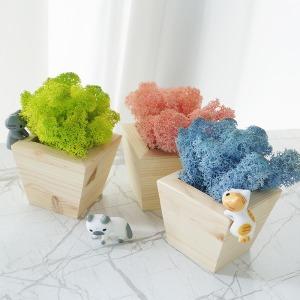 스칸디아모스-우드화분 DIY세트(고양이친구들)