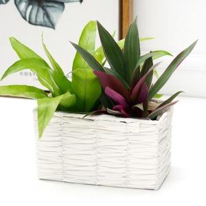 인테리어 화분 커버 바구니 바스켓 공기정화식물 세트