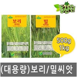 대용량 밀씨앗 보리씨앗 1kg 500g 새싹씨앗 재배용
