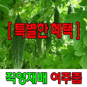 직영재배 여주즙 90ml 40포+3포 전남담양산 여주