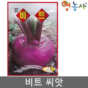 비트씨앗 200립 씨 비트 채소 씨앗 샐러드 빨간무씨앗