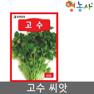 고수씨앗 300립 고수 고수씨 채소 나물 향채소 씨앗