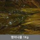 명이나물 1kg 반찬 청정 동해안 속초