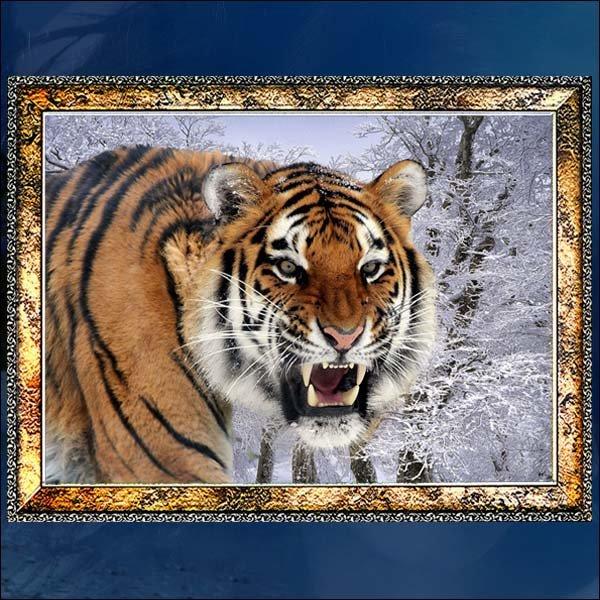 E177-0/호랑이/호랑이액자/호랑이그림/호랑이사진