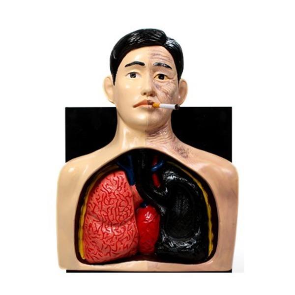 태양  직접흡연 시연기 프리맨 - 흡연예방교육용