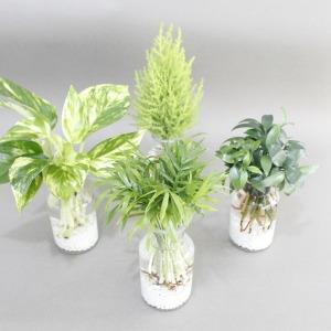 수경재배식물 공기정화 수경식물