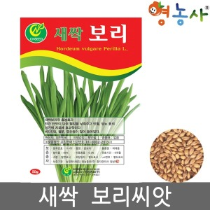 새싹보리씨앗/50g 보리 보리싹 보리씨앗 새싹채소씨앗