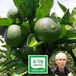 제주 유기농 청귤 풋귤 10kg 산지직송