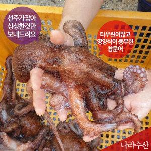 나라수산 동해안 포항 생물 참문어 피문어 550g