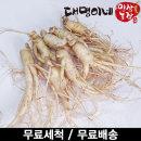 오쿠용 1회분 세척 인삼/수삼/난발 8편내외(250g)