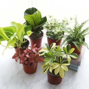 공기정화식물 틸란드시아 허브 75종 모음전