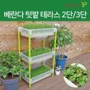 새싹보리 씨앗키우기 실내 화분 베란다텃밭 3단