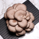 미루나무느타리버섯 1kg /미루나무 톱밥발효 균상재배