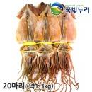 오징어 마른오징어 건오징어 20마리(약1.3kg) 동해안發