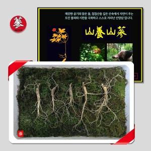 삼바이 토종 산양삼 7년근 5뿌리 선물세트