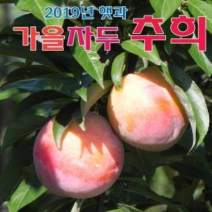 (팔공산농원) 가을자두(추희) 대과 5KG 무료배송