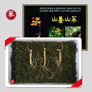 삼바이 토종 산양삼 5년근 3뿌리 선물세트