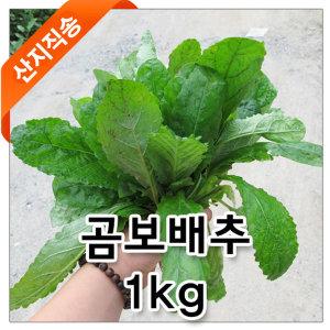 곰보배추 생재/곰보배추/산지직송/경남진주/1kg