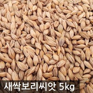 국산 겉보리쌀5kg 새싹보리 씨앗 2019년산