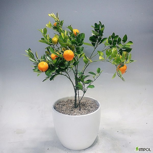 고운플라워  유주나무(중품)-식물만