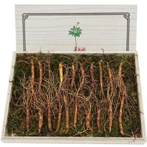 운봉산삼 5-6년근 20뿌리 산양삼 장뇌삼 산양산삼