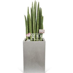 스투키 전국꽃배달 개업화분