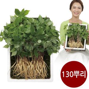 명품 청유담 새싹삼 새싹인삼 인삼새싹 사포닌 130뿌리