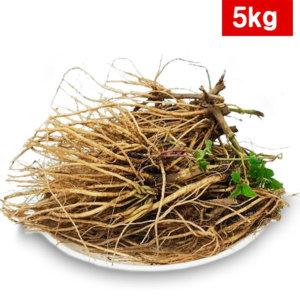 우슬뿌리 5kg 국산 생우슬뿌리 쇠무릎뿌리 우슬생뿌리