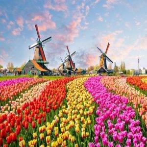 베네룩스 핵심 2국 몽생미셸+로테르담  벨기에+네덜란드+프랑스 7일 OZ