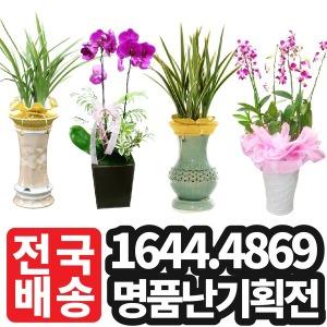 승진화분 개업화분 양난화분 난화분 동양난 만천홍
