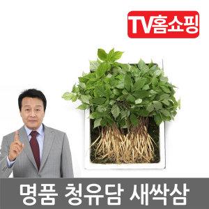 청유담 새싹삼 새싹 인삼 산양삼 130뿌리