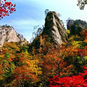 l강원l 설악산+속초중앙시장 당일여행/가을단풍여행/먹거리투어/가을추천여행/버스여행