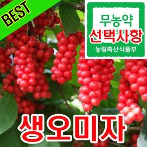 추천 문경 생 오미자 5kg/생과/엑기스/청/당절임