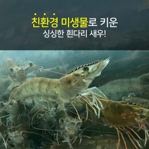 새우 신안 대하 흰다리새우 1kg(38-43미)