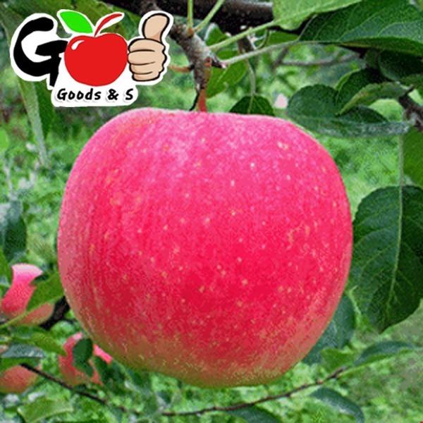 (오늘만No마진7820원)사과중의 으뜸 부사햇사과 7-8kg