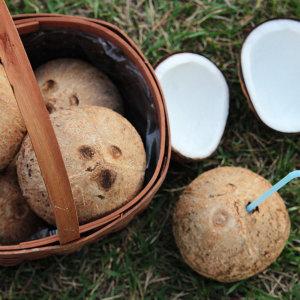 코코넛 야자열매 1개단위(원하는수량만큼 담으세요)