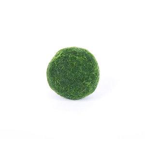 수경식물 마리모 단품 국산-마리모(소)
