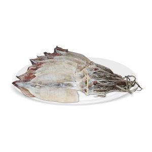 오징어 마른오징어 건오징어 10마리(약500g) 동해안發