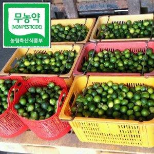 제주 무농약 청귤 풋귤 5kg 담금용