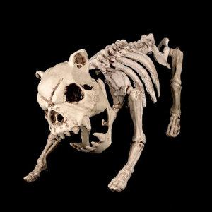 도그스켈레톤/뼈모형 동물뼈 호러 할로윈 소품 장식