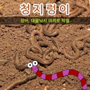 청지렁이/친환경관찰용/학습용지렁이/생미끼/15마리