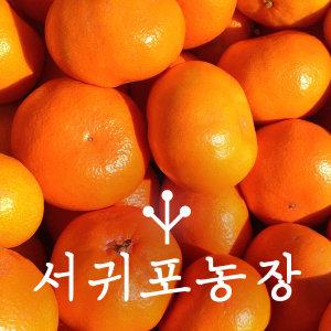 귤 10KG 랜덤 2S~M 소과~중과 서귀포농장