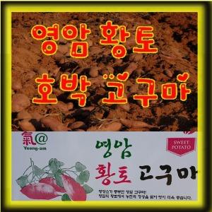 영암 황토 꿀고구마 호박고구마10kg 직접재배