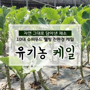 친환경 유기농 케일 즙용 1kg